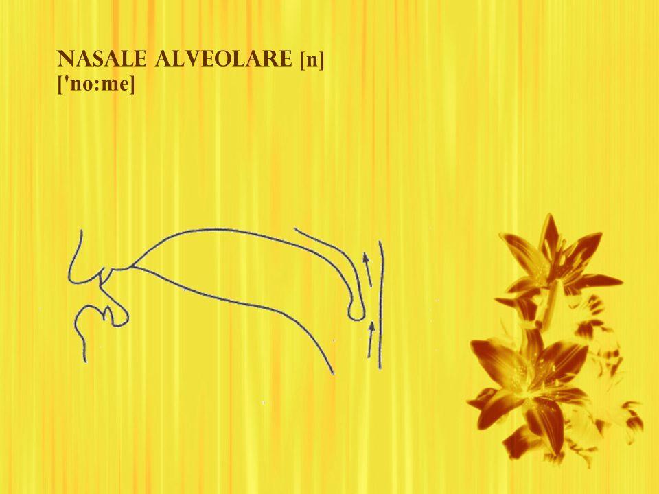 Nasale ALVEOLAre [n] [ no:me]